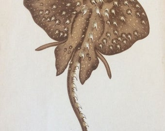 Antique 1862 Hand Coloured Woodblock Print STARRY RAY FISH