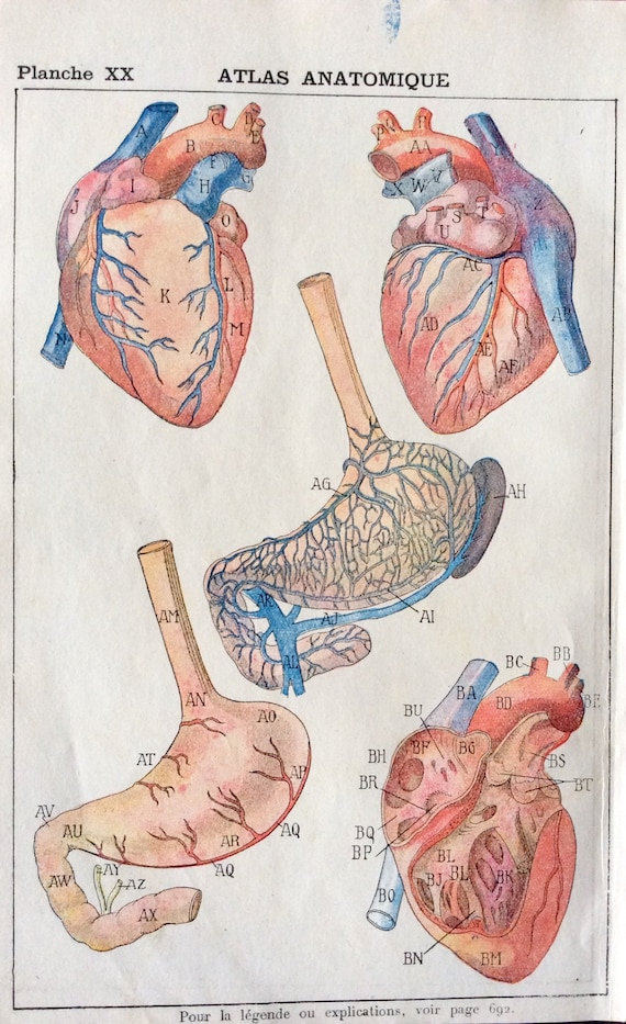 Antique French Anatomy Bookplate Print 1910 Heart Dissection Etsy