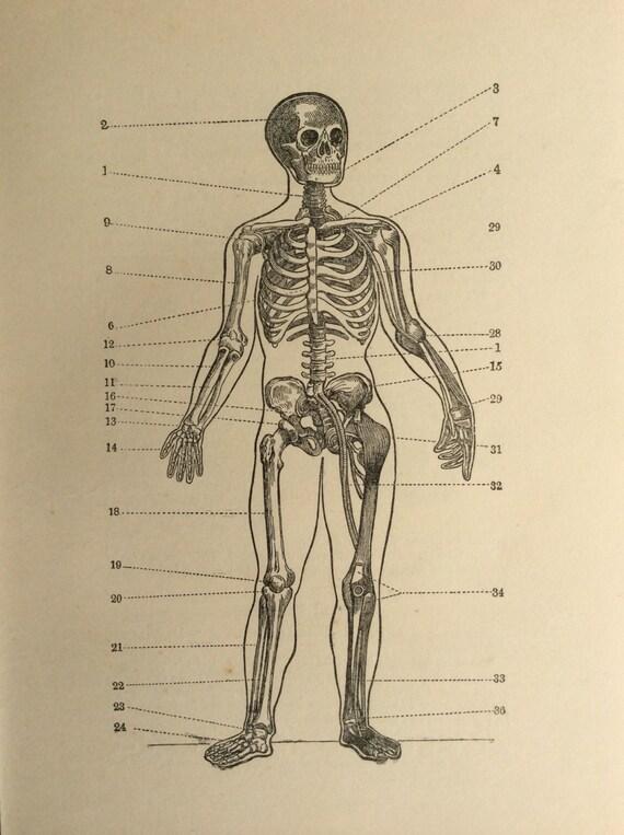 Original Vintage Print Skelett Anatomie 1924 Exlibris Drucken | Etsy