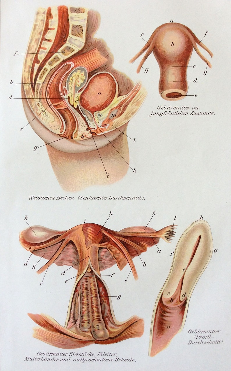 Vintage 1905 útero anatomía médica alemana diagrama Bookplate  3d0b3e8a674fe