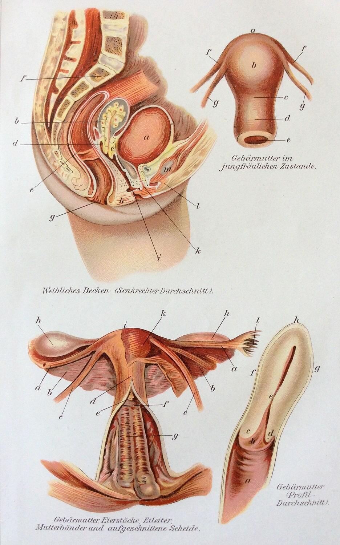 Vintage 1905 útero anatomía médica alemana diagrama Bookplate | Etsy