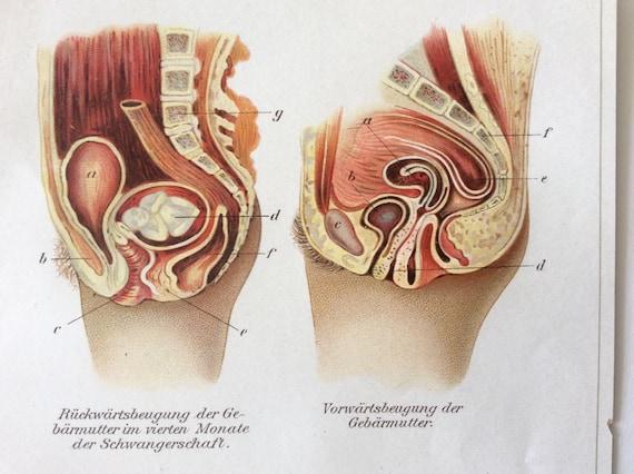 Jahrgang 1907 Schwangerschaft Gebärmutter deutsche Medizin | Etsy