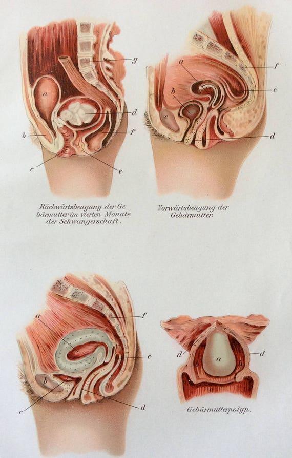 Vintage 1907 anatomía médica alemana diagrama Bookplate útero | Etsy