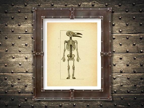 Krähe Schädel Skelett Kunstdruck makaber Corvus Krähe Vogel | Etsy