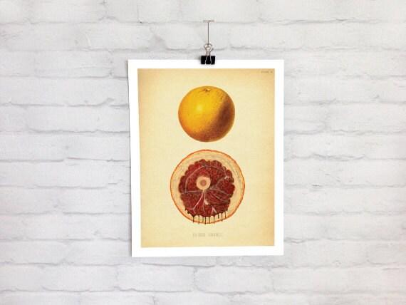 Bloody Anatomy Botanical Citrus Fruit Art Print Macabre Etsy