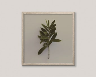Square Plant Art Print | French Country Cottage Decor | Printable Botanical Art | Olive Green Art Print | Plant Photography | Modern Rustic
