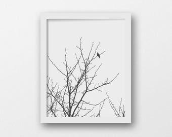 Bird in Tree Silhouette | Modern Rustic Decor | Black and White Printable Art | Large Wall Art | Nature Photography | Minimalist Black Bird