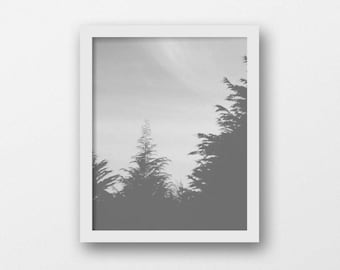 Woodland Tree Wall Art | Minimalist Black and White Printable Art | Contemporary Grey Home Decor | Landscape Photography Print | Instant Art