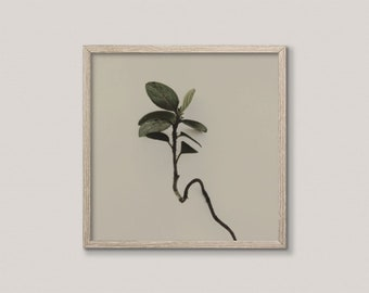 Plant Photography | Printable Botanical Art | Minimalist Nature | Modern Farmhouse Decor | Rustic Wall Art | Olive Green | Country Print