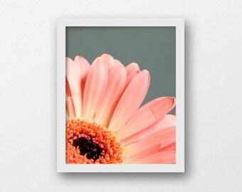 Close-up Flower Photography Print | Printable Botanical Art | Digital Download | Teal and Pink Wall Art | Daisy Art | Modern Minimalist