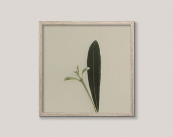 Modern Country Art Print | French Cottage Decor | Plant Photography | Minimalist Plant Print | Olive Green, Taupe | Printable Nature Art