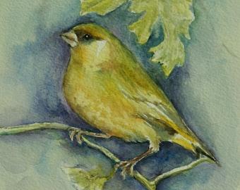 Green finch Painting- Original watercolor