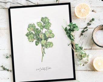 Harvest Cilantro Print