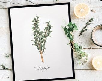 Fresh Thyme Print