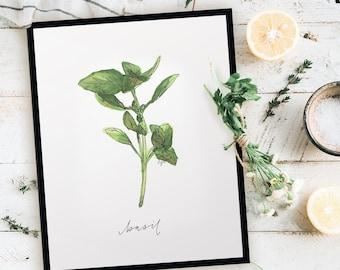 Harvest Basil Print