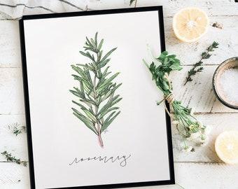 Garden Rosemary Print