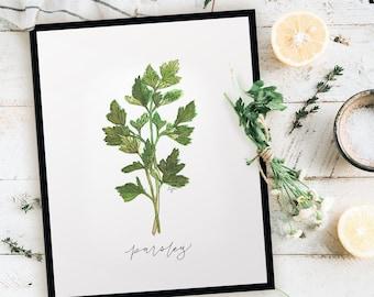 Garden Parsley Print