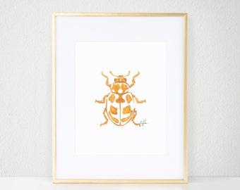 Parenthesis Beetle