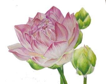 Organic botanical drawing (original 8' x 10')