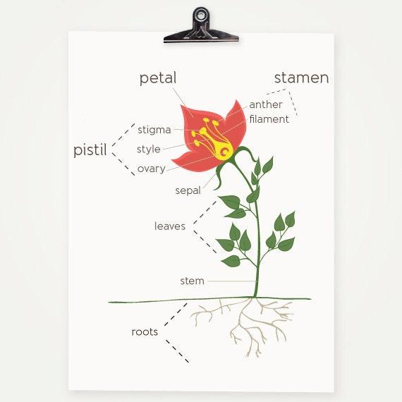 Ähnliche Artikel wie Anatomie einer Blume - typografische Print ...