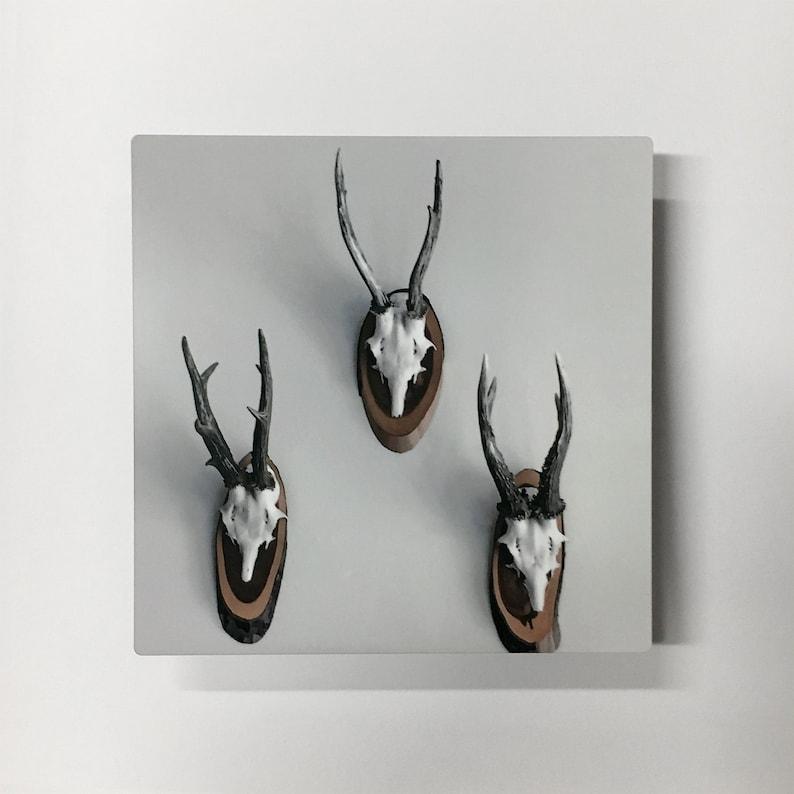Rule of Thirds Photograph of Mounted Deer Skulls Printed on image 0