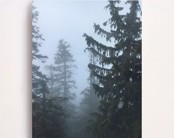 Grouse Mountain - A 11x14 metal print of a misty patch of pine trees on Grouse Mountain