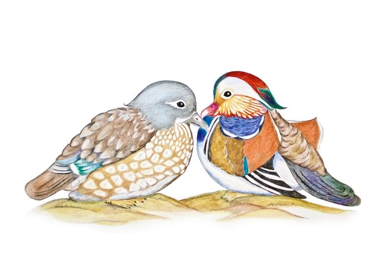 Love Loyalty Purity Enlightenment Rebirth Renewal Marriage Matchmaking in Heaven Mandarin Ducks in a Lotus Pond Wedding Love Bagua Art