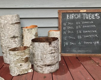 Flower Arranging Beautiful Sleeve of Birch Bark Hollowed Naturally by Decay Natural Birch Bark Sleeve for Crafting Betula Bark C