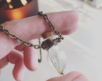 sale FAIRY WING Cicada Bottle Bug Wing Necklace