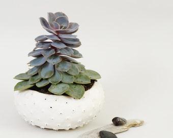 Handmade White Ceramic Planter White Ceramic Plant Pot ~ Modern Planter Urchin Planter Ceramic Pots for Plants ~ Spiky Organic Bowl Brighton