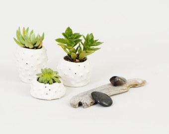 Handmade Ceramics Small Ceramic Planters Small Plant Pot Mini Planters ~ White Ceramic Bowls Urchin Planter Pots for Plants ~ Brighton UK