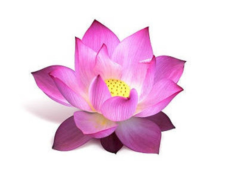 Lotus Fragrance Oil Annointing Oil Scent Magick Candle Etsy