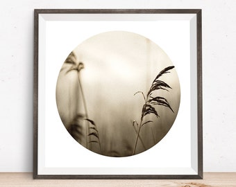 Zen art, meditation art, sepia photo, abstract art, winter grasses, serene art prints, beach prints, large square art, nature photo prints