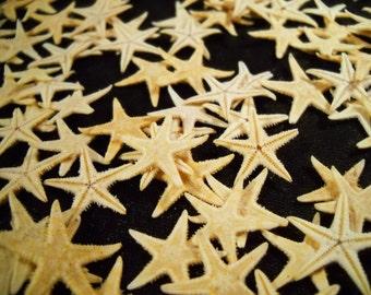 "Multipack Tiny Starfish 1/2-1"" bulk order sea life ocean beach nautical Hawaii seashell decor gift"