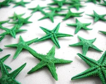 "Multipack Emerald Green Tiny Starfish 1/2-1"" bulk order sea life ocean beach nautical Hawaii seashell decor gift"