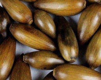 "Multipack 1""-1.5"" Acorns WHOLE Dried Heat Treated Real Seed Pod Wood Nuts Bulk Wholesale"