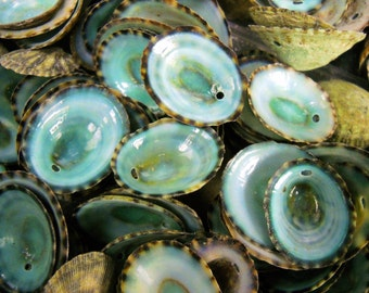 "Multipack .5""-1"" DRILLED green limpet shells seashell ocean beach nautical Hawaiian coastal decoration"