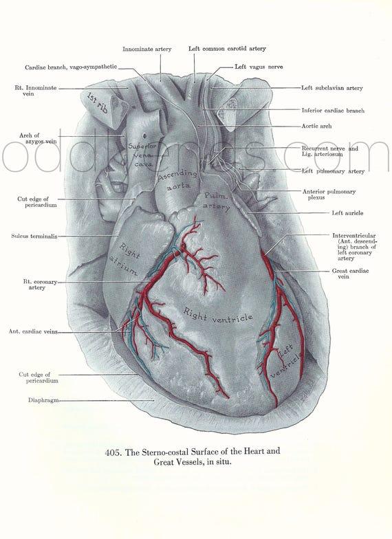 década de 1950 corazón anatomía humana Original Vintage Print | Etsy