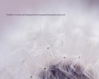 Downloadable Dandelion Spring Glow, Cream, Bokeh, Whimsical signed print, Nursery Art - Fine Art Photography