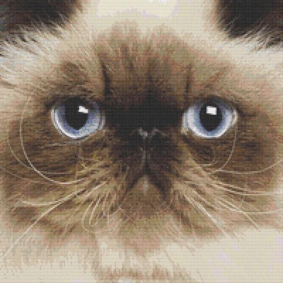 Cross Stitch Pattern - Himalayan Cat Close Up - Instant Download PDF