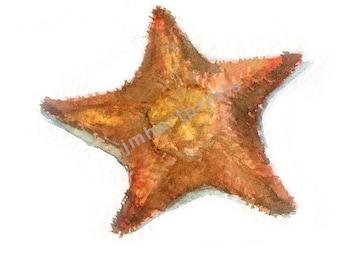 Watercolor Starfish, Starfish Print, Starfish Painting, Starfish Illustration, Starfish Artwork, Starfish Art