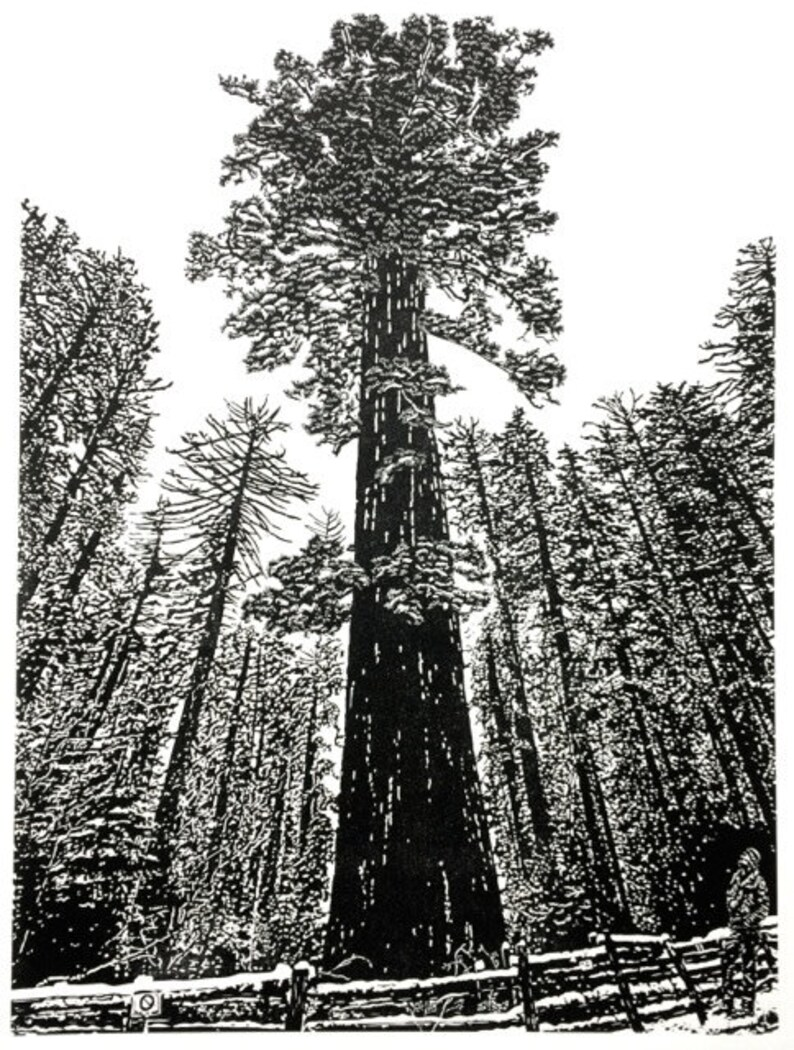 Sequoiadendron giganteum  Yosemite Giant Sequoia Fine Art image 0