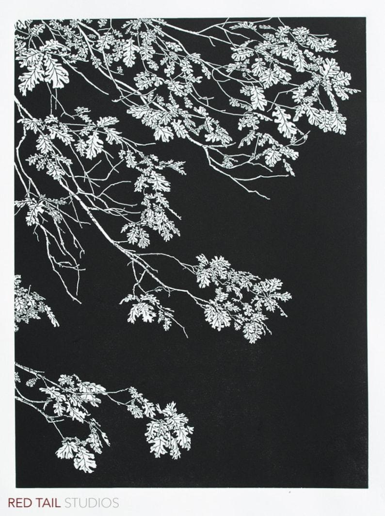 Black Oak  Yosemite Quercus kelloggii tree leaves Fine Art image 0