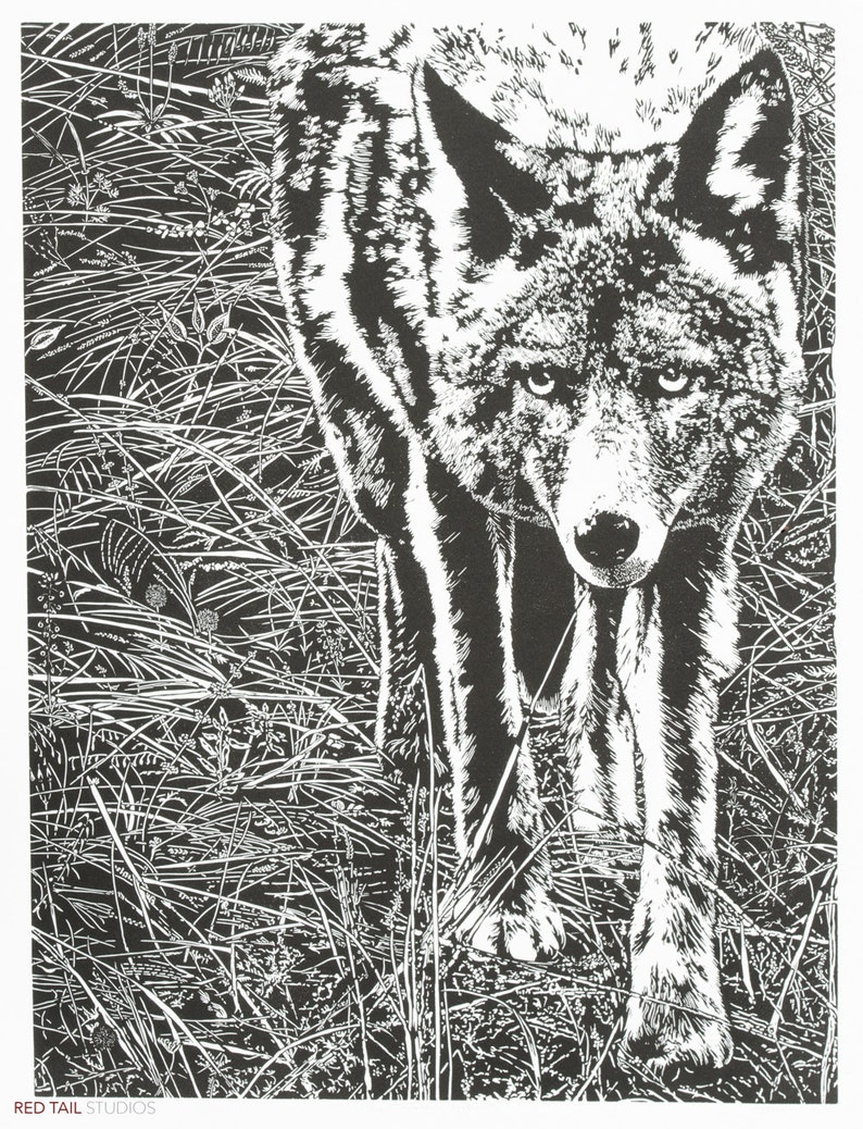 The Trickster  Yosemite Coyote in Sentinel Meadow Fine Art image 0