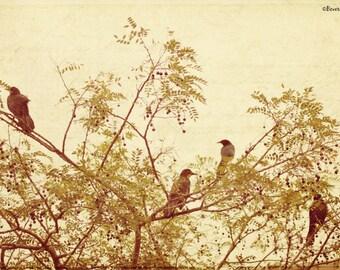 birds, tree, nature, fine art photography