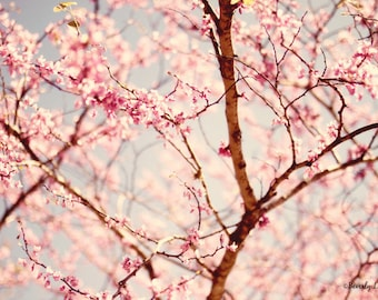 Spring, blossoms, floral, pink, fine art photography