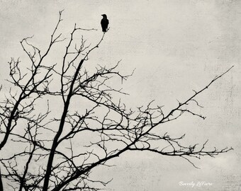 alone, nature, fine art photography