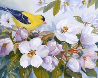goldfinch bird art print, nature art, apple blossoms, flower print wall art by Janet Zeh Original Art