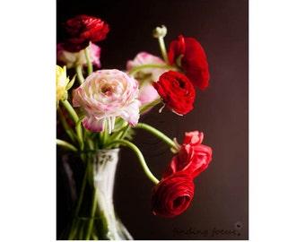 Vibrant Ranunculus Print Botanical Art Photography, Deep Rich Colors Black Ruby Red White & Pink Vase of Flowers, Romantic Cottage Art Photo