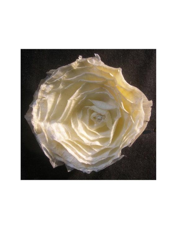 Fragrant white onion flower
